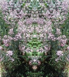 20200803 Gras Spiegelbild ChrisTina Maywald