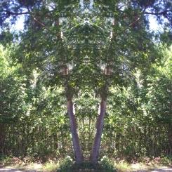 20200804 Baum Spiegelbild ChrisTina Maywald