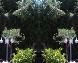 20200805 Bambus Spiegelbild ChrisTina Maywald