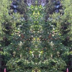 20200807 ObstBaum Spiegelbild ChrisTina Maywald