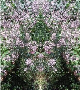 20200810 Gras Spiegelbild ChrisTina Maywald