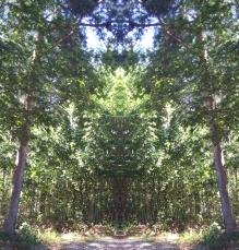 20200811 Baum Spiegelbild ChrisTina Maywald