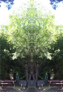 20200818 Baum Spiegelbild ChrisTina Maywald