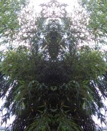 20200819 Bambus Spiegelbild ChrisTina Maywald