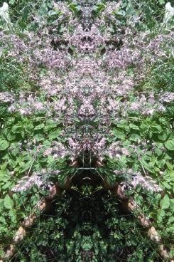 20200824 Gras Spiegelbild ChrisTina Maywald
