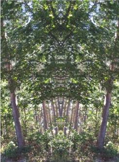 20200825 Baum Spiegelbild ChrisTina Maywald
