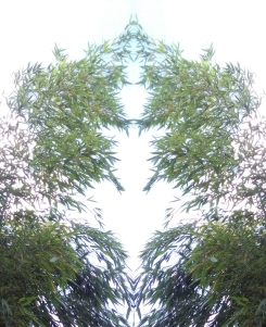 20200826 Bambus Spiegelbild ChrisTina Maywald