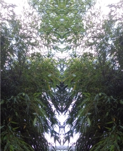 20200830 Bambus Spiegelbild ChrisTina Maywald
