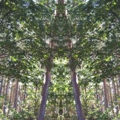 20200831 Baum Spiegelbild ChrisTina Maywald